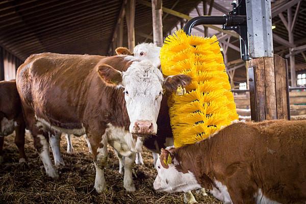 Schwingbürste Maxi für Rinder und Bullen