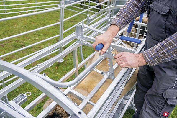 Behandlungsstand Typ Wendebox für Schafe