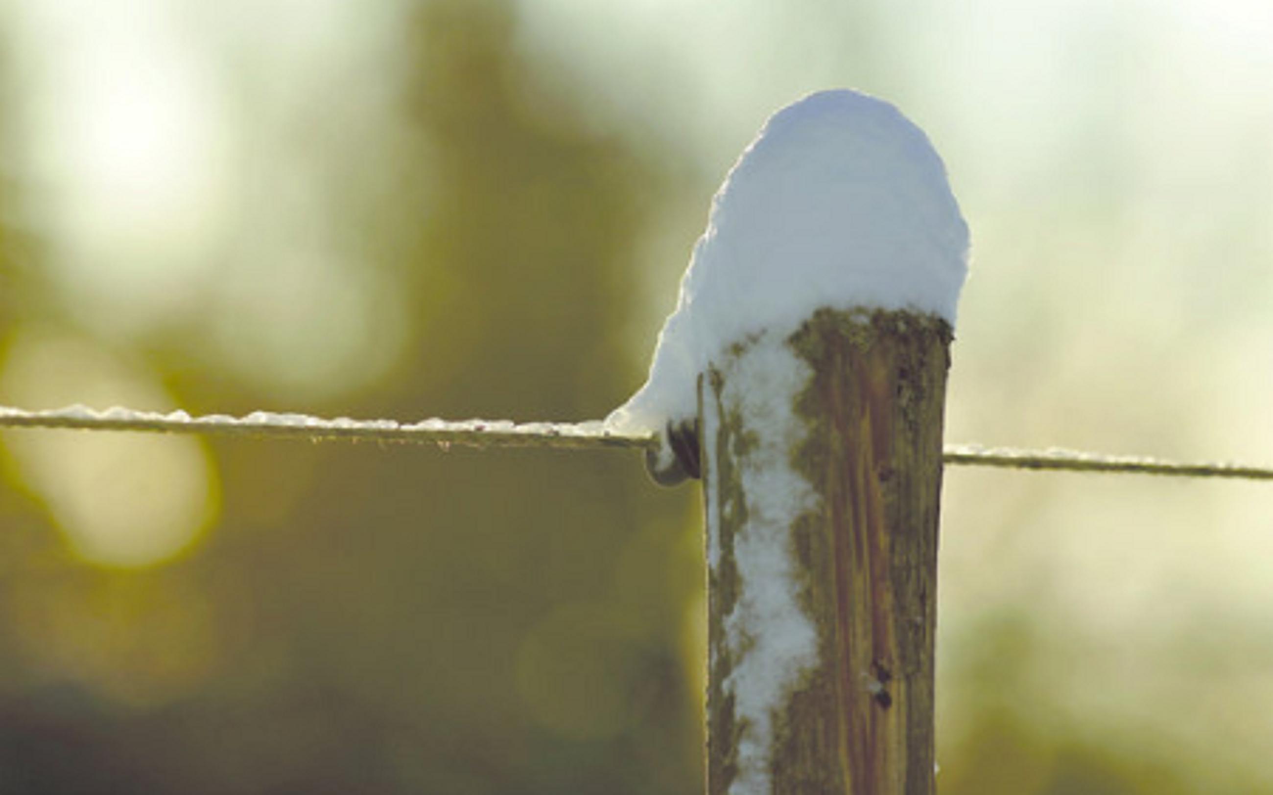 Zäune im Winter